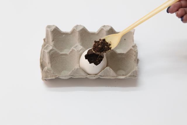 3.Add a little soil into the eggshell.